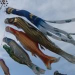 子供の日|端午の節句の鯉のぼりは誰が買う?初節句に時期に由来は?