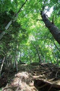 林間学校のバッグ選び|容量は何リットル?泊数別の最適な大きさ