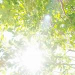 日本の最高気温ランキング40℃超|今年の8月は?|猛暑日?真夏日?夏日?熱帯夜?真夏の気象用語