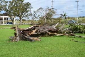 最大瞬間風速81.1m与那国島観測史上最大|ベスト10更新|どんな風?