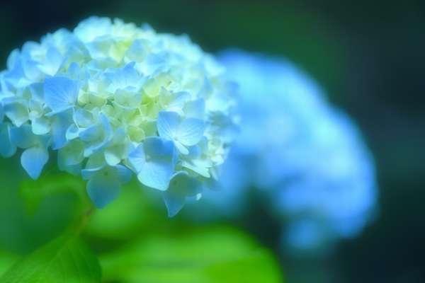 160615_tyuugokuchihou_sanyou_sanin_tsuyuake