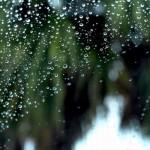 フロントガラスの油膜取りと撥水コーティングはするべきか?ウォッシャー液とワイパーは?
