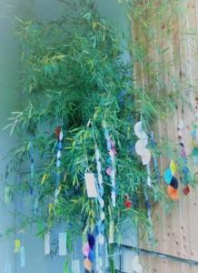 七夕の竹や笹を近所の山で伐採してきたら犯罪?処分方法は?